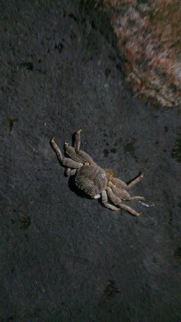Little crabs run along the beach x