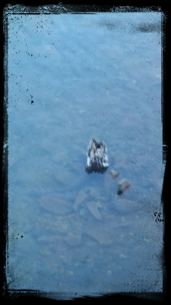 From a distance, I thought this was a Swan and her little baby….. it was a chunk of wood x